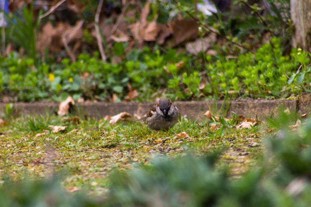 Vogeltje op zoek naar nestmateriaal