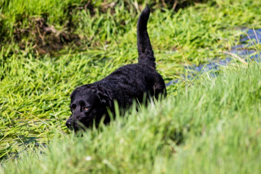 Hondje uitlaten in omgeving